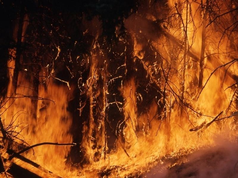 Руководителя тушения оштрафовали за выросший в 25 раз лесной пожар в Забайкалье