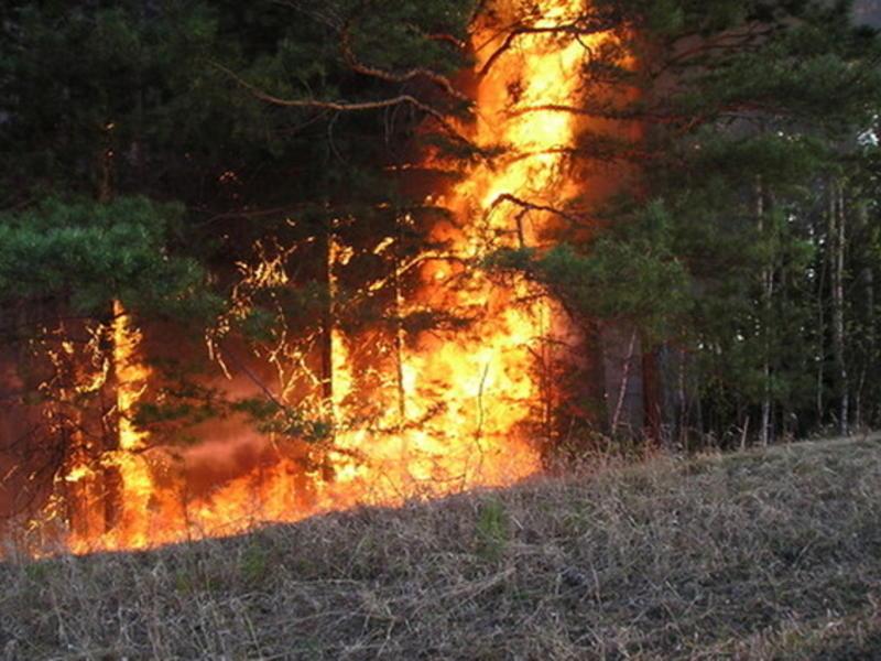 Небрежность работника санатория «Кука» привела к лесному пожару