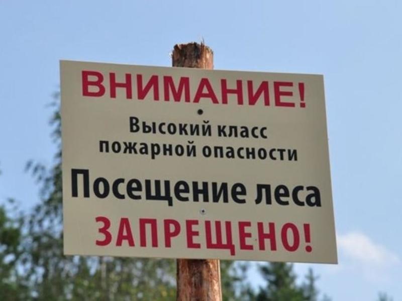 Забайкальцам вновь запретили ходить и ездить в лес
