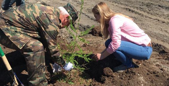 В Петропавловске высадили саженцы лиственницы и сосны