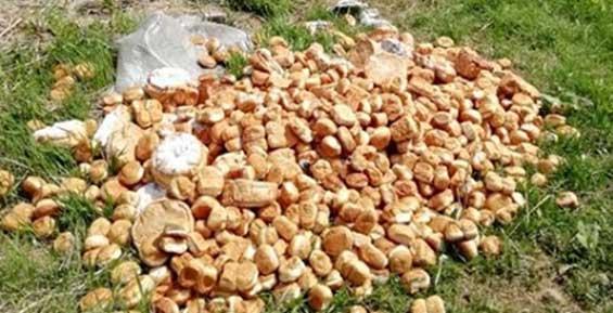 В лесном массиве на Камчатке неизвестные вывалили гору хлеба