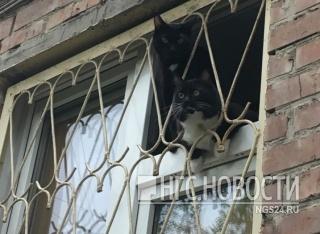 В Красноярске спасатели освободили кота, застрявшего в форточке