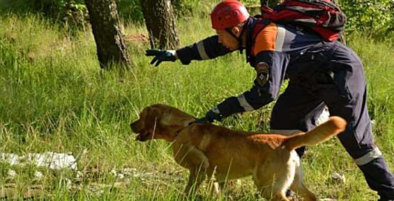 В районе камчатского села Карымай продолжаются поиски пропавшего ребенка