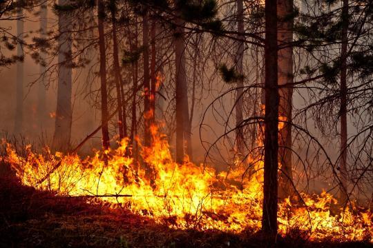 Прокуратура проверит законность решения властей Байкальского региона не тушить пожары