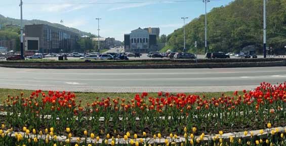 В Петропавловске начали высаживать декоративные цветы