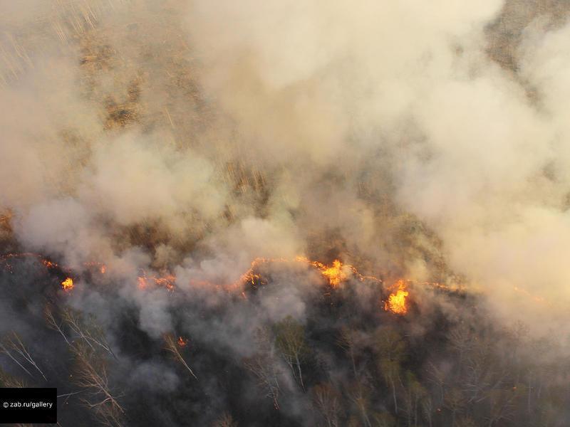 Забайкалье вошло в группу высокого риска по потерям лесов