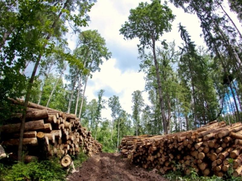Десятилетний запрет на вывоз древесины из РФ готовят в Госдуме
