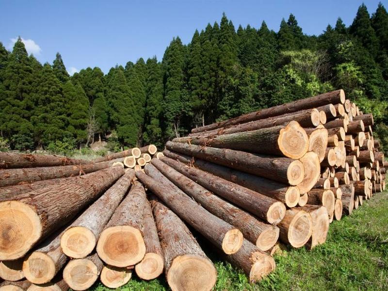 Древесину на восстановление домов после наводнения забайкальцы получат дешевле