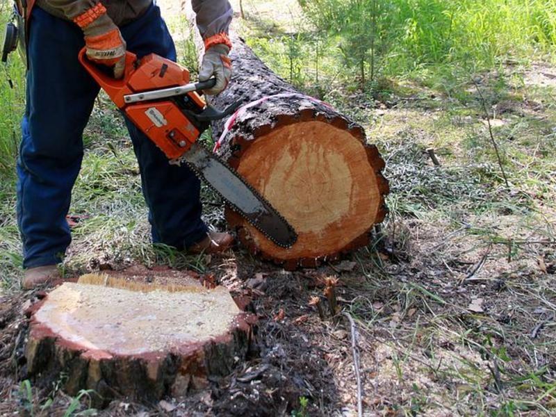Лесничих будут судить за «крышевание» чёрных лесорубов в Забайкалье