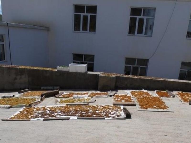 Корсун: ФСБ уже пора вмешаться в незаконный вывоз солодки в Китай