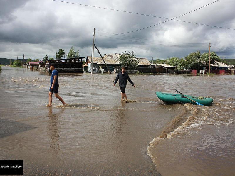Почти 80 погибших от наводнения гусей и кур нашли ветеринары в микрорайоне Чите