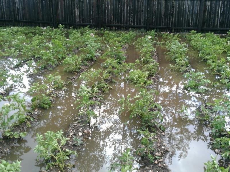 Подтопленных посевов в Забайкалье становится больше - Минсельхоз
