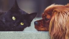 Ветеринары придумали, как узнать возраст собак и кошек