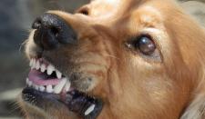 В Египте 23 человека подверглись нападению бешеной собаки