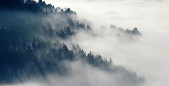 На Камчатке спасатели помогли двум мужчинам, заблудившимся в туманном лесу