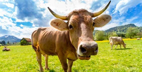 На Камчатке не нашли больных лептоспирозом домашних животных