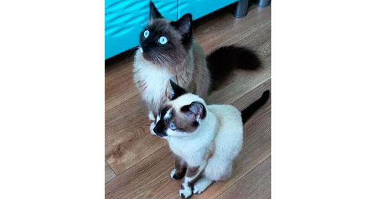 В Петропавловске полиция помогла зоозащитникам спасти кошек