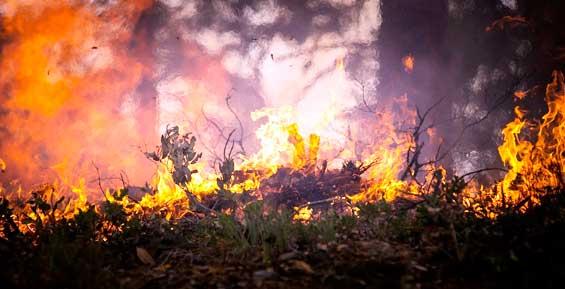 На Камчатке локализовали лесной пожар в долине реки