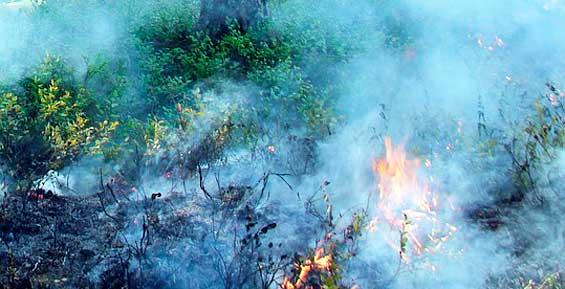 На севере Камчатке власти не борются с сильным лесным пожаром