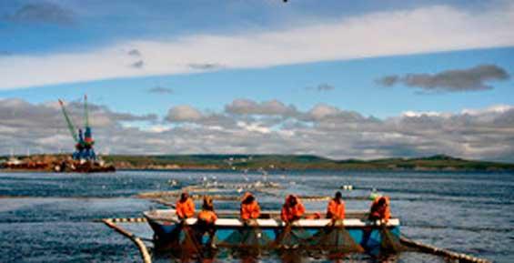 Власти объявили о росте вылова лосося на восточном побережье Камчатки