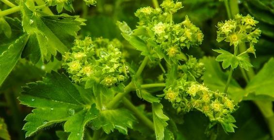 Камчатские ученые обнаружили на Командорах новый вид растительности