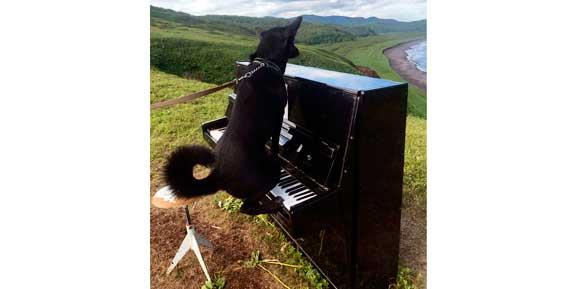 На Камчатке отдыхающие обнаженным снимаются с пианино на фоне океана