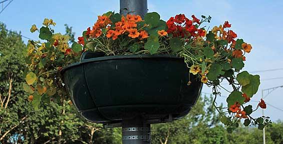 Петропавловск украсят 220 подвесных вазонов с декоративными цветами
