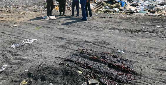 На Камчатке Россельхознадзор уничтожил партию санкционной вишни из Польши