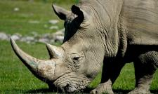 Носорог атаковал туристов в сафари-парке