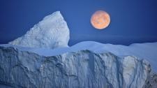 Ученые обеспокоены проникновением в Арктику опасных инфекций