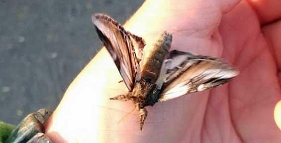 В Кроноцком заповеднике отмечают небывалое нашествие ночных насекомых (фото)