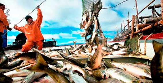 Камчатские рыбаки почти в два раза превзошли вековой рекорд «красной» путины