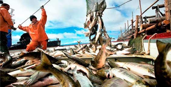 На Камчатке объемы вылова лососей увеличили до 364 тысяч тонн