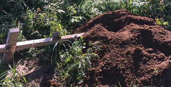 Медведи вновь разрыли могилы на камчатском кладбище (фото, видео)
