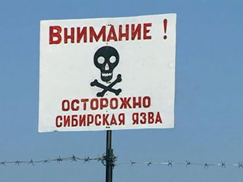 Главврач инфекционной больницы: Существует риск заражения сибирской язвой в Забайкалье