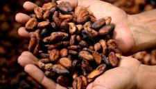 Учёные обнаружили новые полезные свойства какао