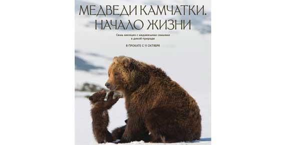 На широких экранах в России покажут фильм «Медведи Камчатки. Начало жизни»