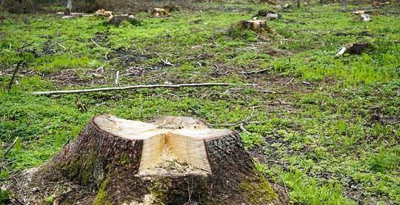 Министерство обороны пыталось отсудить у «Камчатскэнерго» 24 миллиона за рубку леса