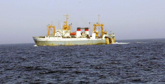 Часть рекордных уловов лососей с Камчатки увезли на хранение в Китай