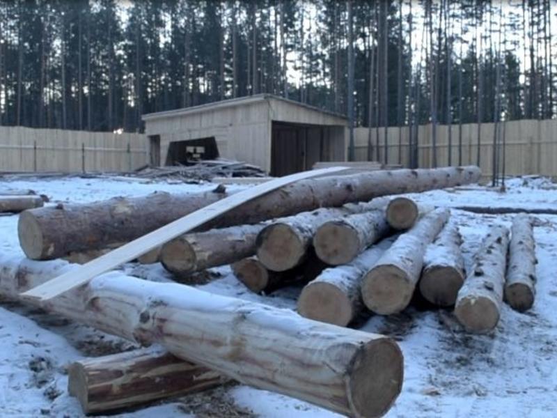 Супругов из Забайкальска подозревают в организации банды «черных лесорубов»