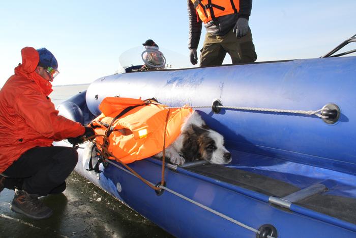 Спасатели освободили вмёрзшую в лед озера Кенон собаку