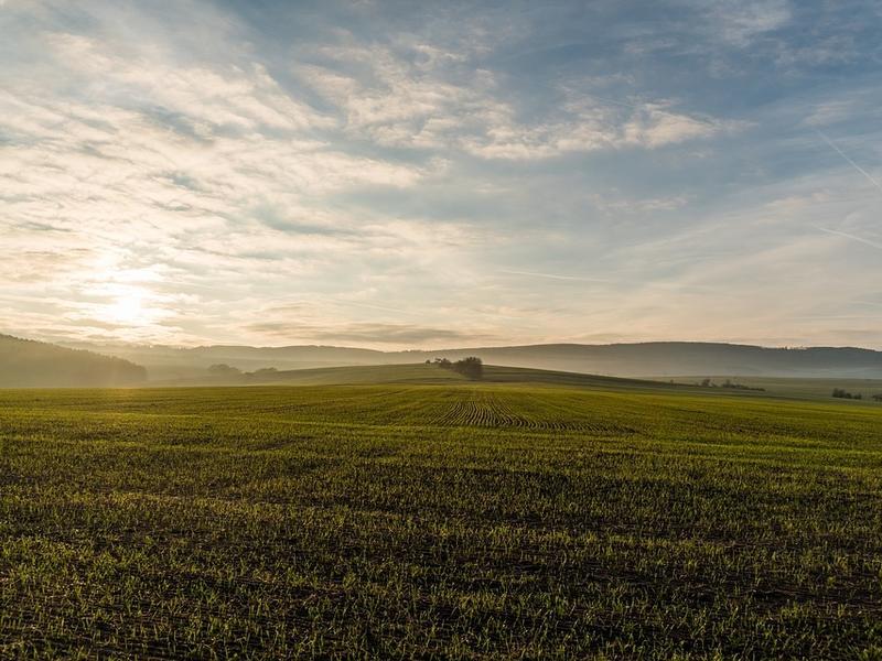 «Дальневосточный гектар» могут начать выдавать в Забайкалье с 1 июня 2019 года