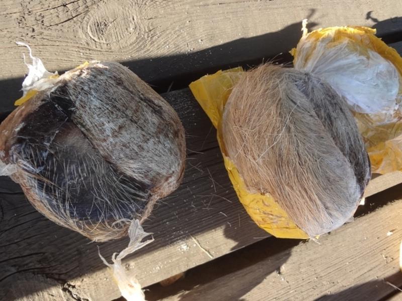 Более 30 хвостов оленя нашли в вагонах с пиломатериалами на госгранице в Забайкальске