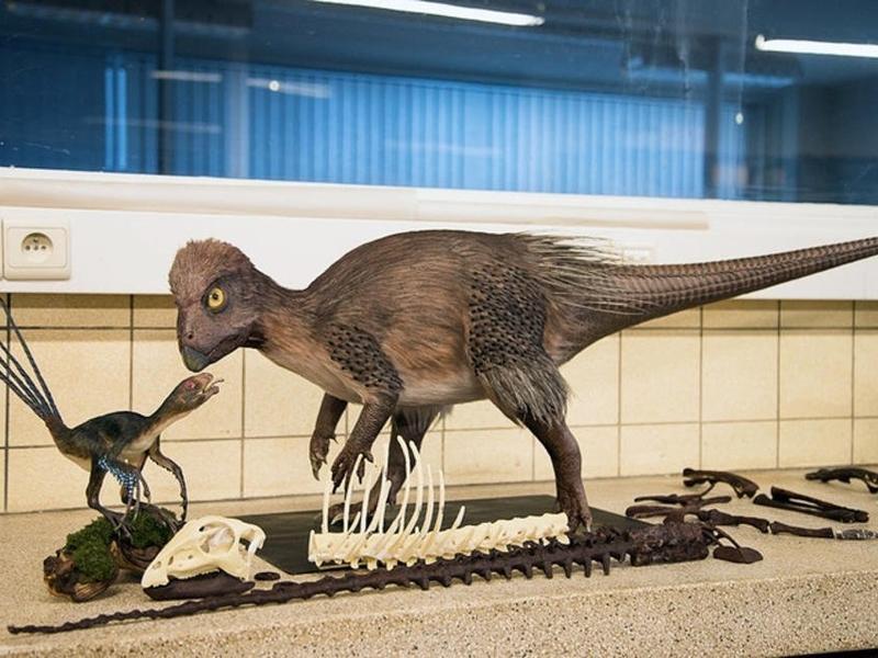 Власти Чернышевского района надеются на развитие туризма в «заповеднике динозавров»